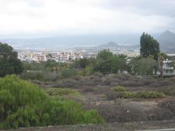 Tenerife Mai 2008 (92).JPG