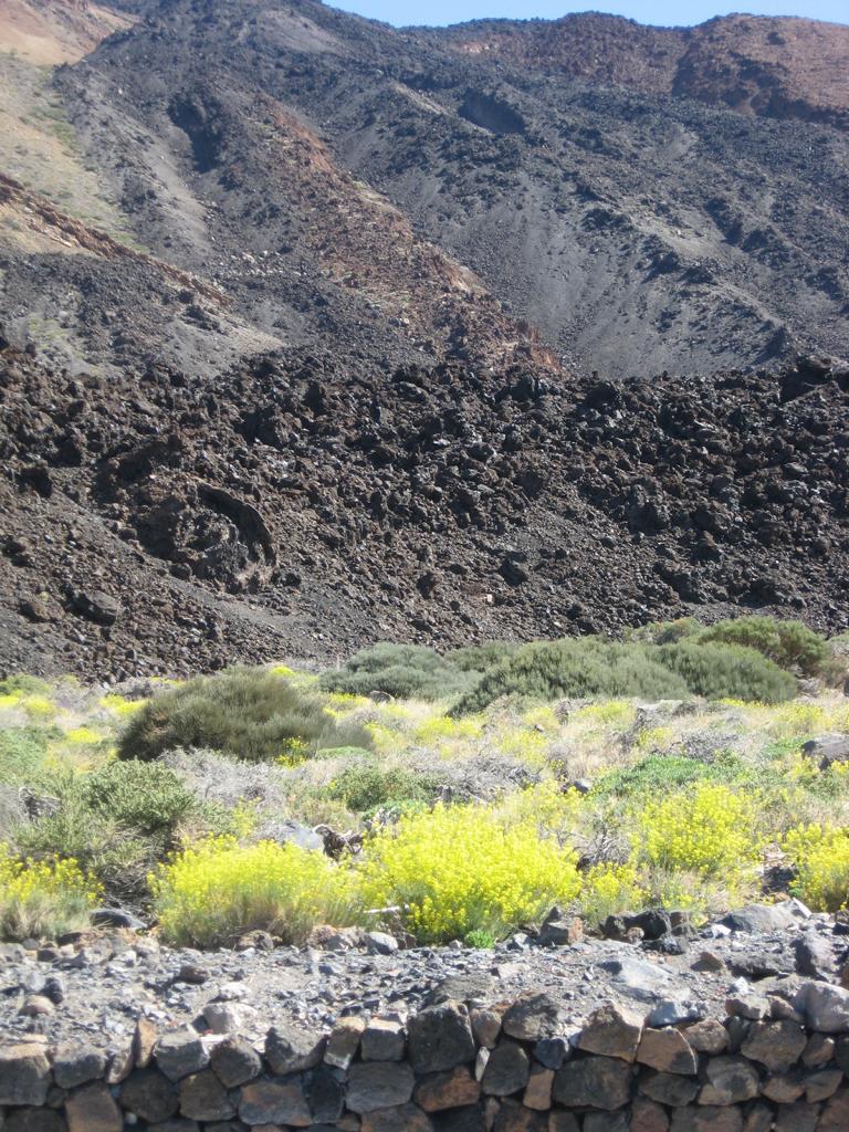 Tenerife Mai 2008 (514).JPG