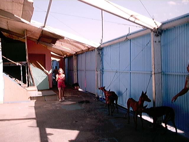 Hundeaustellung Fuerte Oktober 2001 (3)