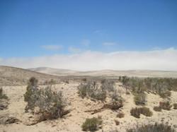 Fuerteventura Juni 2011 (84).JPG