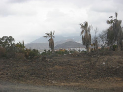 Tenerife Mai 2008 (100).JPG