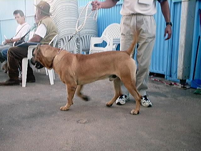 Hundeaustellung Fuerte Oktober 2001 (57)
