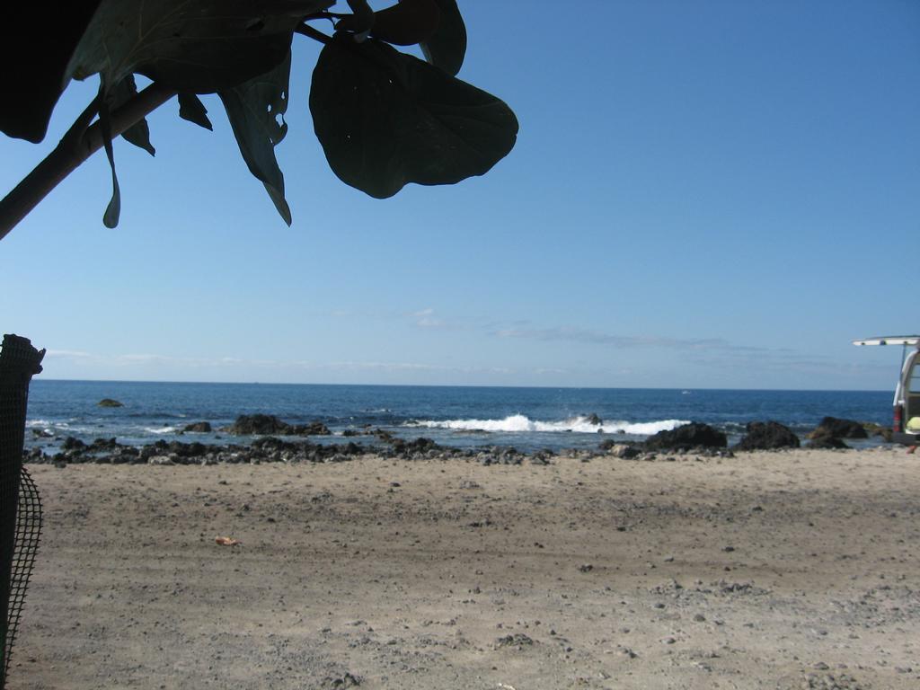 Tenerife Mai 2008 (29).JPG
