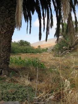 Fuerteventura Mai2009 (95).JPG