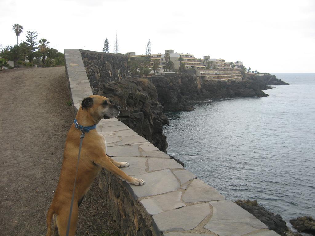 Tenerife Mai 2008 (96).JPG