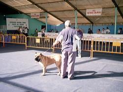 Hundeaustellung Fuerte Oktober 2001 (42)