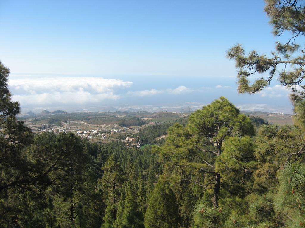 Tenerife Mai 2008 (407).JPG