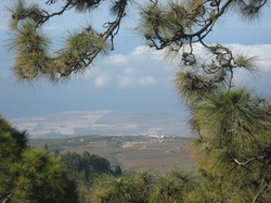 Tenerife Mai 2008