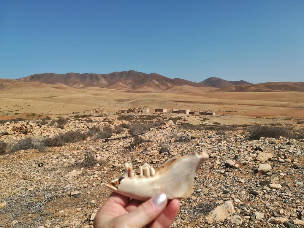 Fuerteventura 08 2018 (27)