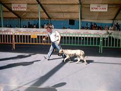 Hundeaustellung Fuerte Oktober 2001 (30)