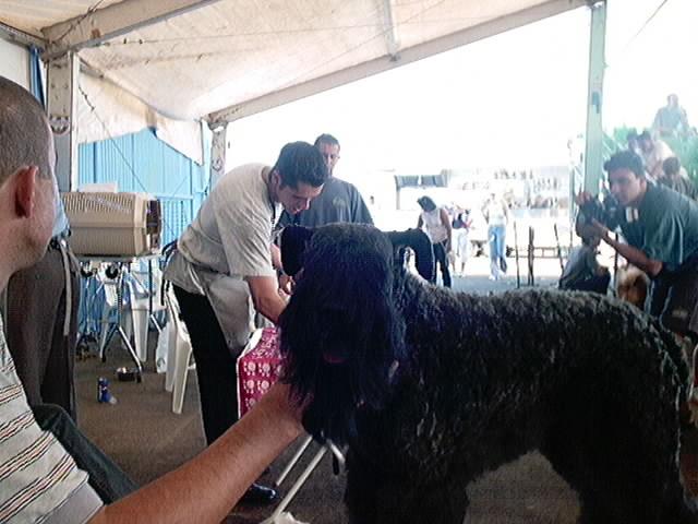 Hundeaustellung Fuerte Oktober 2001 (15)