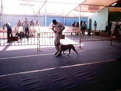 Hundeaustellung Fuerte Oktober 2001 (34)