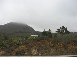 Tenerife Mai 2008 (43).JPG