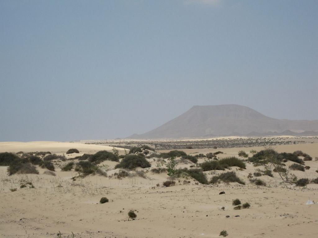 Fuerteventura Mai2009 (64).JPG
