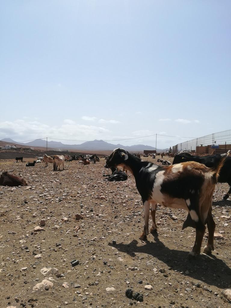 Fuerteventura 08 2018 (30)