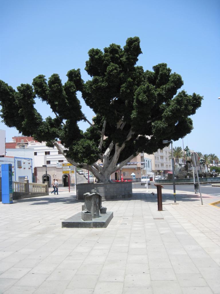 Fuerteventura Juni 2011 (23).JPG