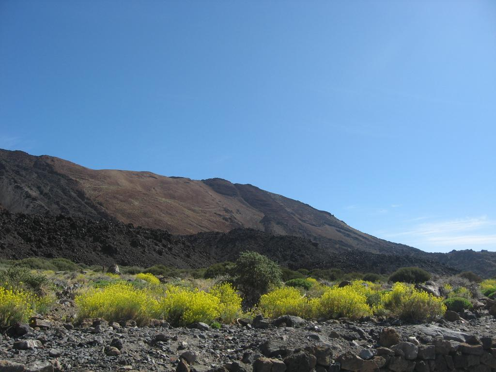 Tenerife Mai 2008 (483).JPG