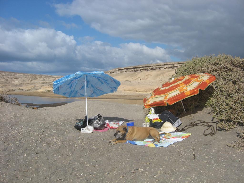 Tenerife Mai 2008 (121).JPG
