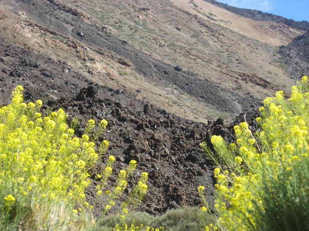 Tenerife Mai 2008 (516).JPG