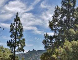 Gran Canaria Mai 2015 (60).JPG