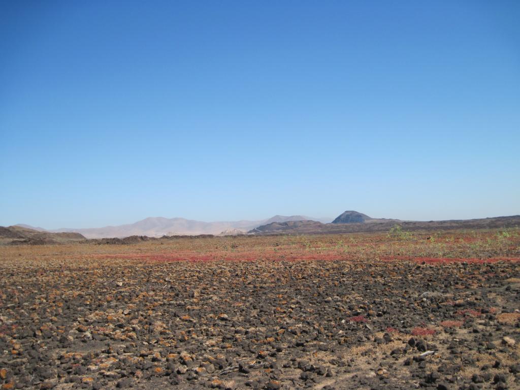 Fuerteventura Juni 2011 (74).JPG