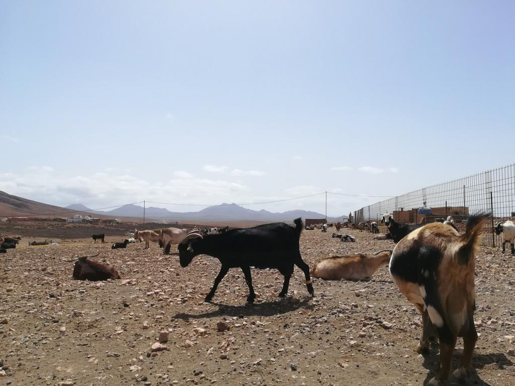 Fuerteventura 08 2018 (31)