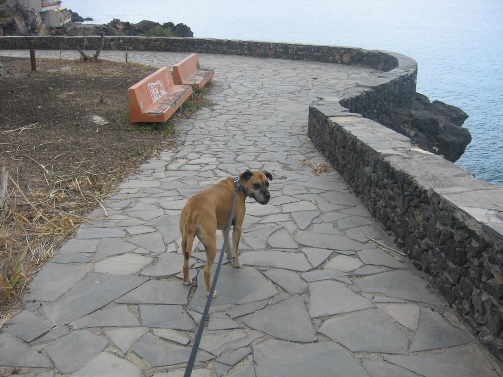 Tenerife Mai 2008 (151).JPG