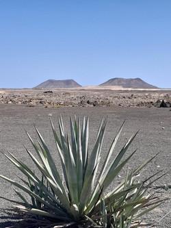Fuerteventura Febr 2020 web (107)