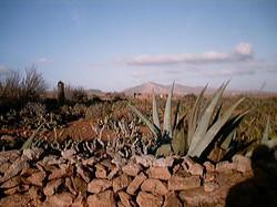 Leben auf Fuerte 2001 (127)