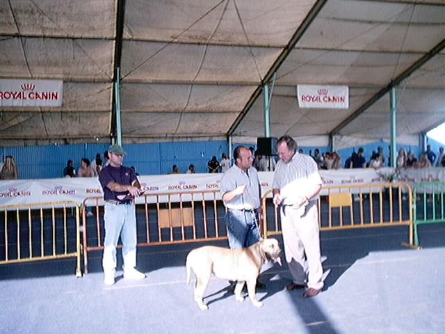 Hundeaustellung Fuerte Oktober 2001 (41)