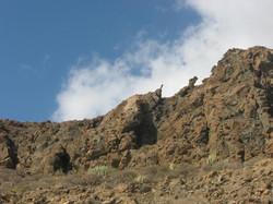 Tenerife Mai 2008 (172).JPG