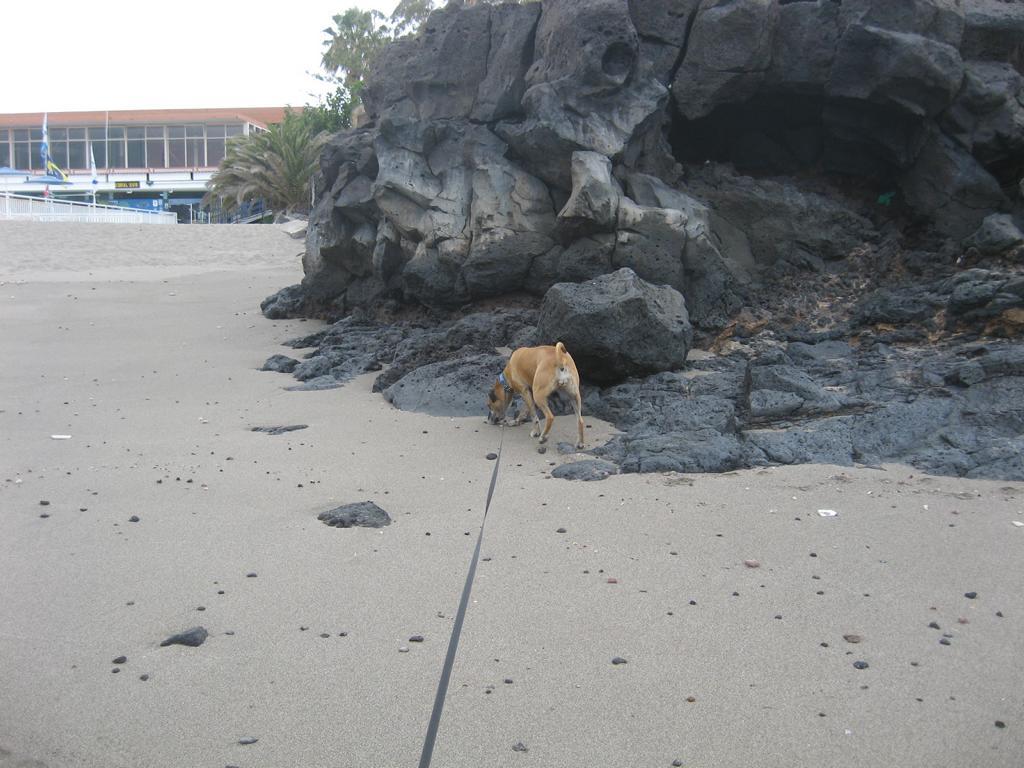 Tenerife Mai 2008 (108).JPG