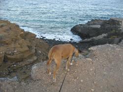 Tenerife Mai 2008 (6).JPG