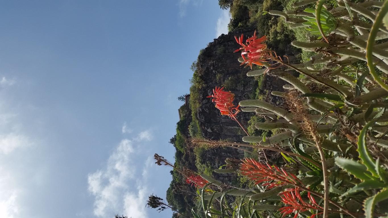 Gran Canaria Mai 2015 (33).JPG