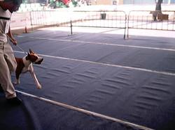 Hundeaustellung Fuerte Oktober 2001 (35)