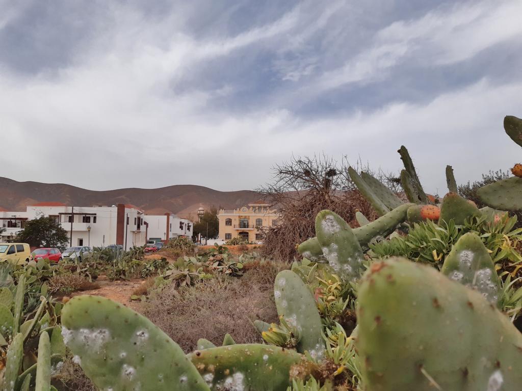 Fuerteventura Febr 2020 web (23)