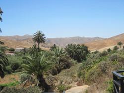Fuerteventura Juni 2011 (56).JPG