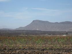 Fuerteventura Mai2009 (83).JPG