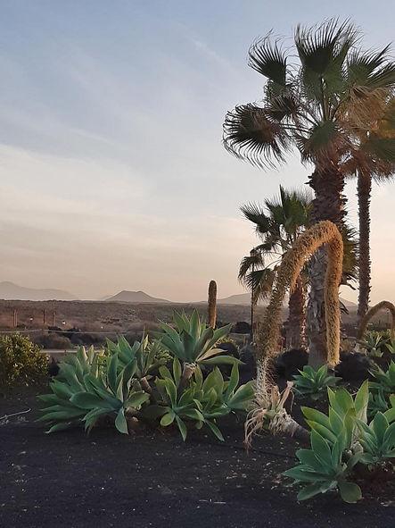 Fuerteventura Febr 2020 web (3).JPG