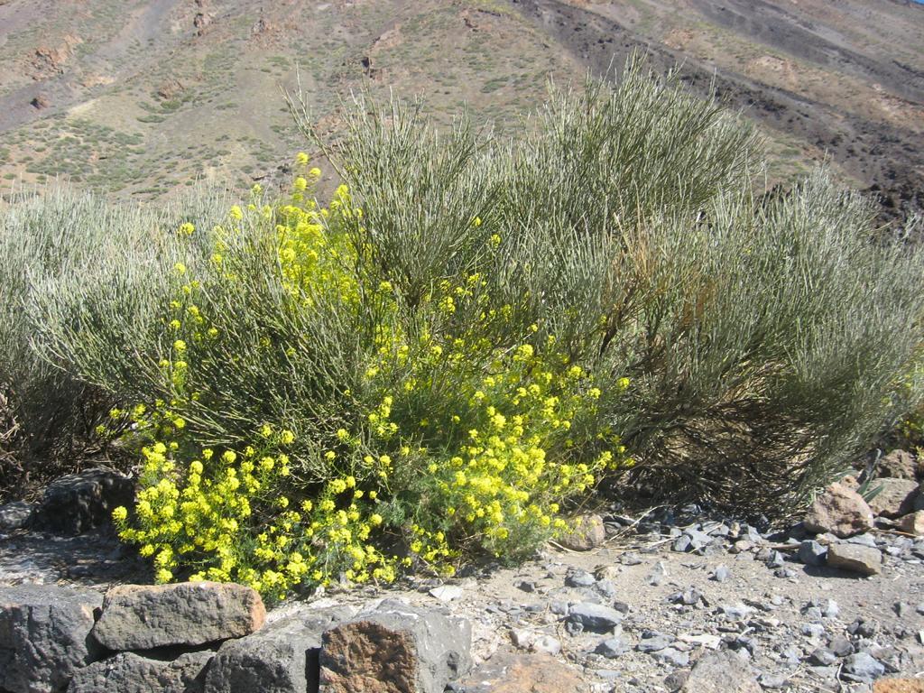 Tenerife Mai 2008 (479).JPG