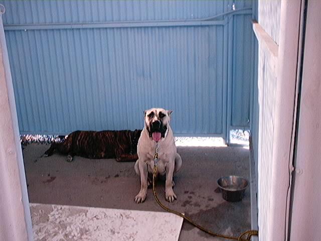 Hundeaustellung Fuerte Oktober 2001 (5)
