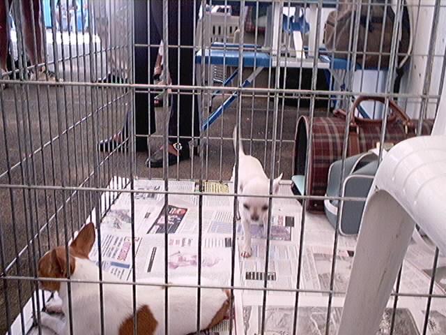 Hundeaustellung Fuerte Oktober 2001 (12)