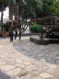 Fuerteventura Mai2009 (29).JPG