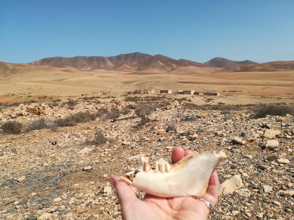 Fuerteventura 08 2018 (26)