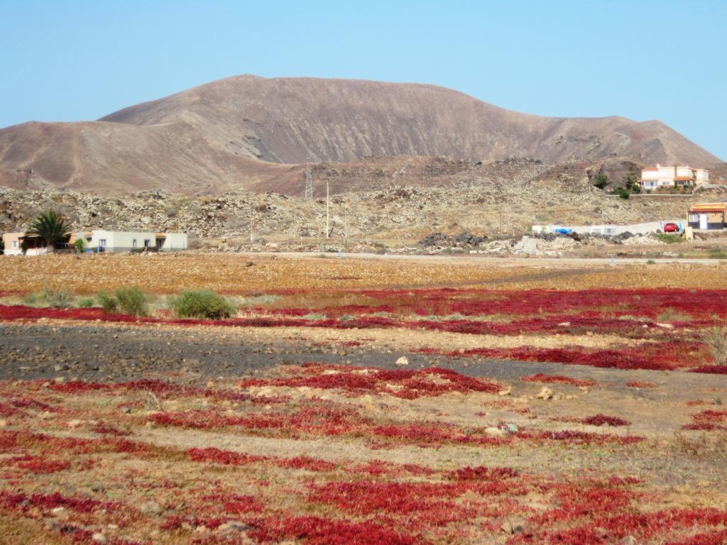 Fuerteventura Juni 2011 (2).JPG