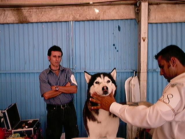 Hundeaustellung Fuerte Oktober 2001 (20)