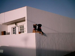Leben auf Fuerte 2001 (5)