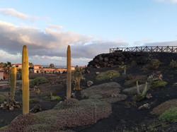 Fuerteventura Febr 2020 web (44)