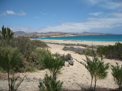 Fuerteventura Mai2009 (13).JPG
