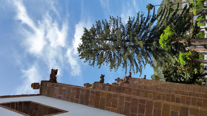 Gran Canaria Mai 2015 (40).JPG